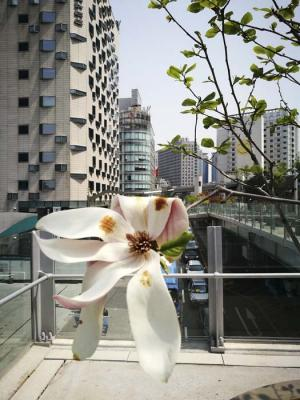 Seoul Flowers and Trees - tribute to Lee Friedlander